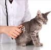 Ветеринарные клиники в Заокском